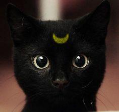 crescent moon kitty <3 looks like someone airbrushed my kitten! Haha