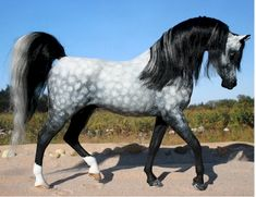 grey dapple arabian horse - inspiration for Mistborn Beautiful Arabian Horses, Most Beautiful Horses, Majestic Horse, All The Pretty Horses, Animals Beautiful, Arabian Stallions, Appaloosa Horses, Breyer Horses, Rare Horses
