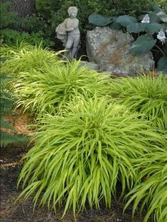 Aztec Grass Perennial Will Die Back In The Winter 12 24