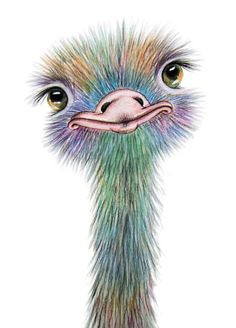 OSTRICH Art Signed Print from an original watercolour painting by artist Maria Moss. Available in 4 sizes - Watercolour Painting, Painting & Drawing, Pour Painting, Animal Drawings, Art Drawings, Posters Vintage, Bird Art, Oeuvre D'art, Canvas Wall Art