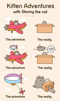 Kitty Adventures with Stormy the Cat and Pusheen Gato Pusheen, Pusheen Love, Pusheen Stuff, I Love Cats, Cute Cats, Funny Cats, Funny Humor, Crazy Cat Lady, Crazy Cats
