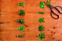 Herb Appeal http://www.runnersworld.com/fridge-wisdom/10-herbs-that-will-help-you-run-better