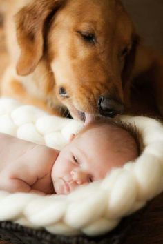 The gentle love and attention - poignant moment. Beautiful and wonderful. #newborn baby #dogs and their humans #pets