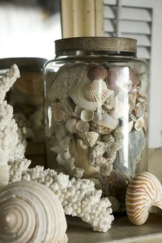Every beach cottage needs a shell collection…even in the mountains the beauty of shells are something to behold…. Beach Cottage Style, Beach House Decor, Coastal Style, Coastal Decor, Home Decor, Coastal Living, Goin Coastal, Coastal Cottage, Cottages By The Sea