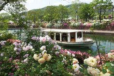 Rose Canal at Huis Ten Bosch Sasebo City & Saikai City Nature – seas & rivers / Flowers / Old buildings and streets / Theme parks