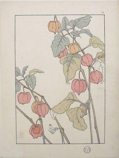 Jeannie Foord - Plate 23. Decorative Flower Studies. Paris: E. Greningaire, 1904. http://fineantiqueprints.com/Botanicalsearly20th/FoordJeannieArtNouveau