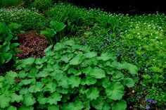 note the sweet woodruff and ladys's mantle  Astrid's Garden Design: May 8 - Plant Combos Part 3