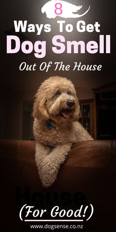 How To Rid Your House Of Dog Smells (easily)-- Dog Tips and Hacks. 8 fabulous (and cheap) ways to get dog smell out of the house, couch and carpets. How to remove and keep the smell from coming back without spending a fortune on steam cleaning! Dog Urine, Pet Odors, Cheap Dog Houses, Dog Cleaning, Steam Cleaning, Cleaning Tips, Cheap Dog Kennels, Pet Odor Remover, Smelly Dog