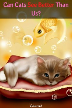 How do cats see? White and Black or like humans? Cat Cats really see better than us? And more facts about cat vision Easy Food To Make, How To Make, Got Dragons, Get Gift Cards, Xbox One Pc, Toddler Schedule, Cat Facts, Luxury Watches For Men, Cats And Kittens
