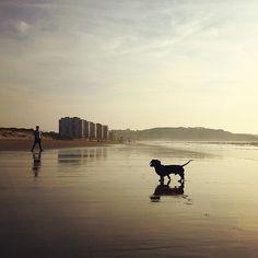 🌅🐚✨🌅🐚✨🌅🐚✨ #salinas #asturias_ig #asturiasgram #asturias_nature #asturiasgrafias #salinas #salinasbeach #espartal #playadesalinas #beachlife #🐚 #sunset #🌅 #sunsetbeach #atardecer #sunset_ig #fotomovil_es #montereylocals #salinaslocals- posted by ↞ νєиυиσ ↠ https://www.instagram.com/ve_nu_no - See more of Salinas, CA at http://salinaslocals.com