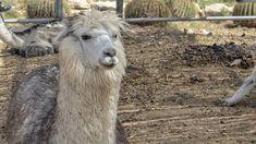 Mitzpe Ramon, Animals, Animales, Animaux, Animal, Animais