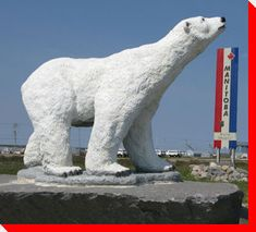 Polar Bear - Churchill, Manitoba Polar Bears are not this big! It's really a statue / replica of one. But I'm sure if you find one chasing you it will seem this big! Canadian Things, Canada Eh, Canadian History, Roadside Attractions, Tiger Cubs, Tiger Tiger, Bengal Tiger, Travel List, Canada Travel