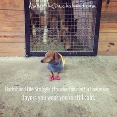 Dachshund Life Struggle #15 // The Struggle is Real // Ammo the Dachshund