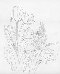 Colibri, tulipe. Dessin