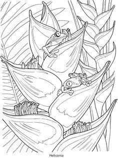 Creative Haven Tropical Blooms Coloring Book (Creative Haven Coloring Books) Coloring Pages To Print, Coloring Book Pages, Printable Coloring Pages, Coloring Sheets, Tumblr Coloring Pages, Creative Haven Coloring Books, Free Adult Coloring, Dover Publications, Tropical Art