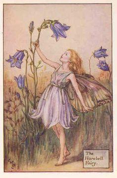 Cicely Mary Barker, Flower Fairies Books, Illustration Blume, Illustration Girl, Fairy Drawings, Fairytale Drawings, Vintage Fairies, Art Society, Fairytale Art