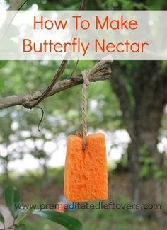 How to Make Butterfly Nectar - Make a quick and simple butterfly nectar recipe to draw butterflies into your garden. http://premeditatedleftovers.com/gardening/make-butterfly-nectar/?utm_content=buffere4f46&utm_medium=social&utm_source=pinterest.com&utm_campaign=buffer#_a5y_p=1581219