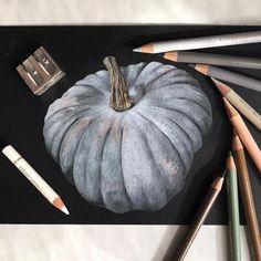 Тыква Pumpkin Иллюстрация цветными карандашами на черной бумаге Colored pencils illustration on black paper ботаническая иллюстрация Botanical illustration
