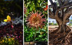 #Pflanzenvielfalt von #La #Reunion © Carina Dieringer