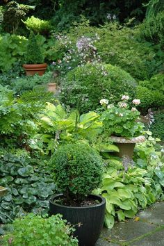 Shade container garden idea.