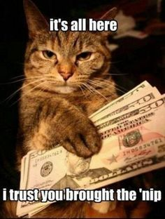 Top 30 Funny cat Picture Quotes