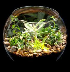 Aprenda a montar um mini jardim em um aquário. Facil, rapido e não requer muito espaço!