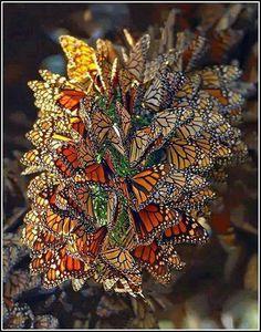 Allemaal vlinders