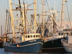 Commercial fishing from Ocean City Maryland consists of a variety of commercial vessels that fish the Atlantic Ocean including surf clam boats, scallop boats, groundfish trawlers, lobster boats, gill net boats, and boats that fish for sea bass using pots, trawls and hand lines. Inshore boats fish for blue crabs, hard clams and gillnet for a variety of inshore fish.