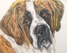 Saint Bernard watercolor original 8x10. St by HarvestmoonFarm on etsy. Custom pet portraits in multiple media available