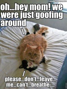 FUNNY KITTIES