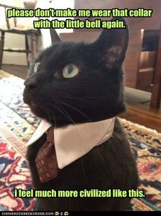funny cat pictures - please don't make me wear that collar with the little bell again.               i feel much more civilized like this.