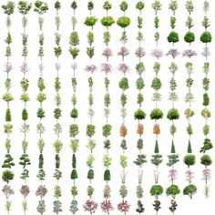 Ultra High Quality PSD Trees with transparent background
