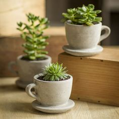 Concrete Tea & Coffee Cup Pots with Attached Saucer – LilLambs Boutique