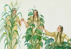 More history & temperature info re: 3 Sisters Garden - Corn, Beans & Squash