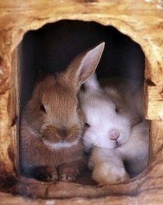 two friends :)