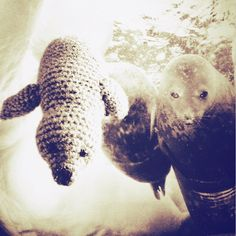 #amigurumi #foca #familia #crochet #ganchillo #océano #naturaleza #nadando #bajo #hielo #seal #family #swimming #ocean #nature #under #ice #handmade