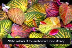 The many hues that compose our day to day moments and our entire life, are ours already to be lived and enjoyed. The colors of the rainbow are mine already.