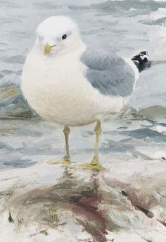 Study of a Common Gull - Lars Jonsson - oil on canvas