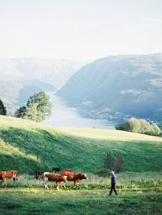 Erich McVey Wedding Photography | Ulvik, Norway