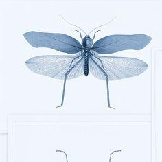 MTG Wallpaper Entomology Blue WP20235