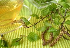 Kask on rahvameditsiinis hästi tuntud ja hinnatud taim. Kaselehti kogutakse mais ja juunis, kui nad on täiesti välja arenenud, kuid alles aromaatsed - siis on nende ravitoime kõige suurem.