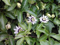 Blooms a plenty