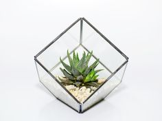 Succulent Terrariums by DingaDing