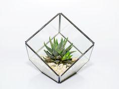 Succulent Terrariums by DingaDing
