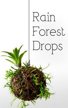 Rainforest Drops are vertical gardening, houseplants and container gardening, all rolled up into a ball and reinvented.