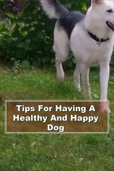 Dog ownership is a long and complex adventure, and you never know when some of the advice you've just reviewed will come in handy. You now know what it takes to be a responsible, caring master. Using these suggestions, treat your dog right