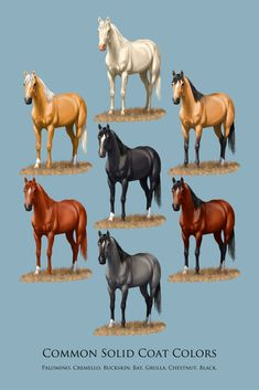 Horse Common Solid Coat Colors Chart Art Print by Crista S. Forest - X-Small Beautiful Horse Pictures, Beautiful Horses, Horse Color Chart, Horse Coat Colors, Nerf Gun, Head Shots, Art Things, Donkeys, Painting Tutorials
