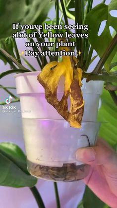 Cactus Plants, Garden Plants, Indoor Plants, House Plants Decor, Plant Decor, Household Plants, Pothos Plant, Inside Plants, Plants Are Friends