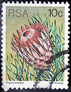 Protea Stamp idea for tattoo? South Afrika, Postage Stamp Collection, Protea Flower, Flower Stamp, Photo Wall Collage, African Animals, African Design, Fauna, Stamp Collecting
