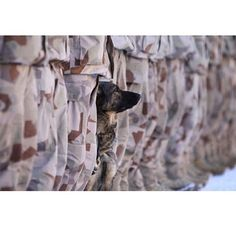 #Hereos come in all shapes and sizes.  Via @elitesoldiers #k9#military#militarydog#picoftheday#photoofthedday#semperfi#schäferhund#wardog
